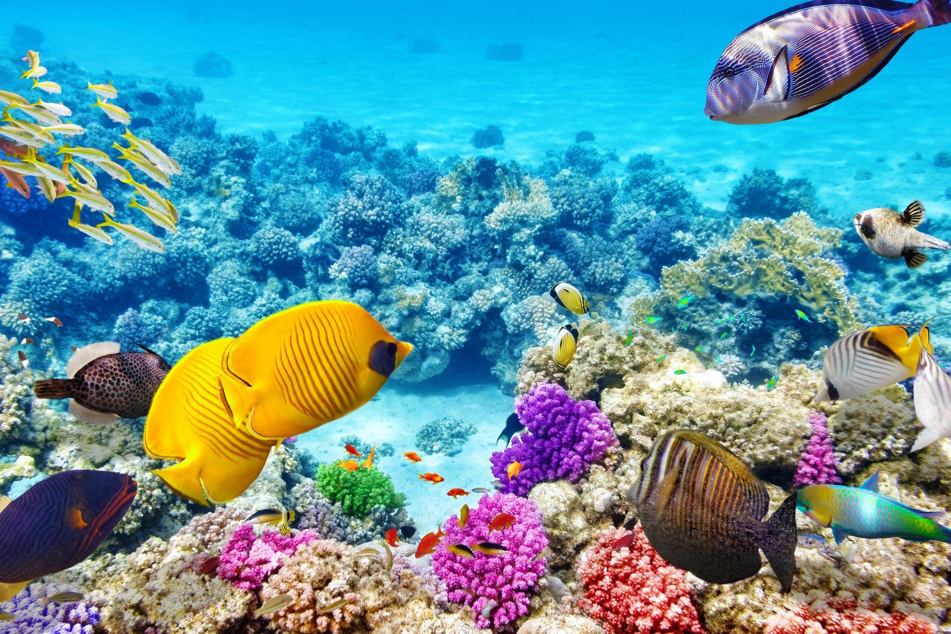 сорта подводный мир океана фото высокого разрешения словам