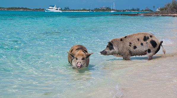 yacht-charter-itinerary-the-bahamas-staniel-cay-3.jpg